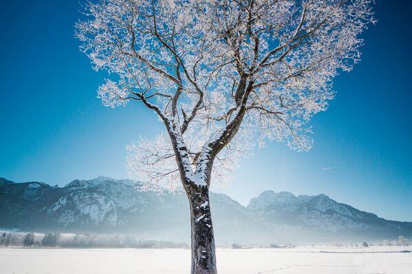Fotografie zamrzlého stromu v Německu - Sputnik Česká republika