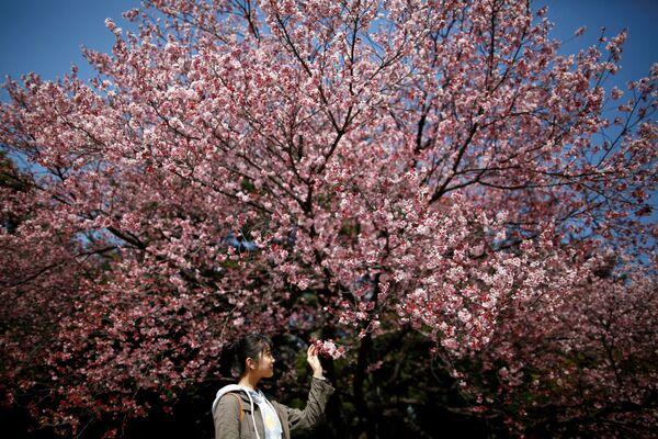Návštěvnici Národního parku Shinjuku Gyoen obdivují kvetoucí sakuru, 14. března 2018 - Sputnik Česká republika