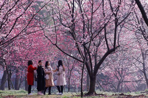 Květoucí sakura v Národním parku města Wuhan v Číně, provincie Hubei, 9. března 2018 - Sputnik Česká republika
