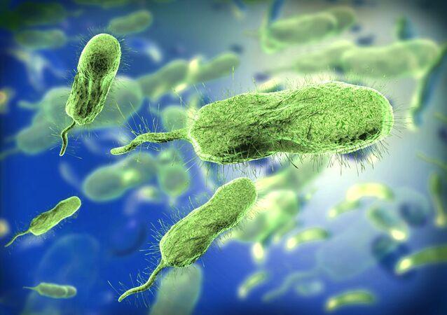 Bakterie. Ilustrační foto