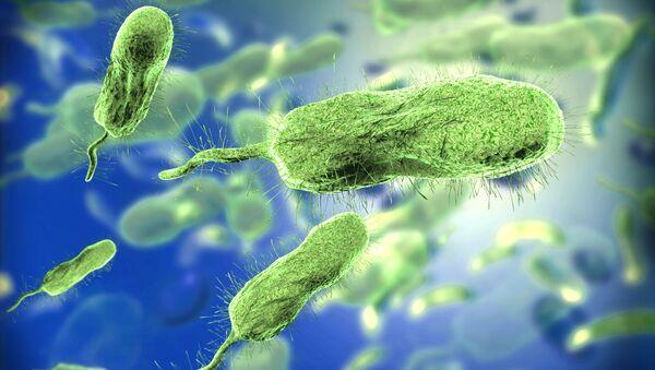 Bakterie. Ilustrační foto - Sputnik Česká republika