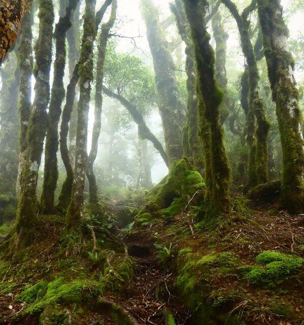 O čem mluví stromy. Báječné a mystické lesy - Sputnik Česká republika