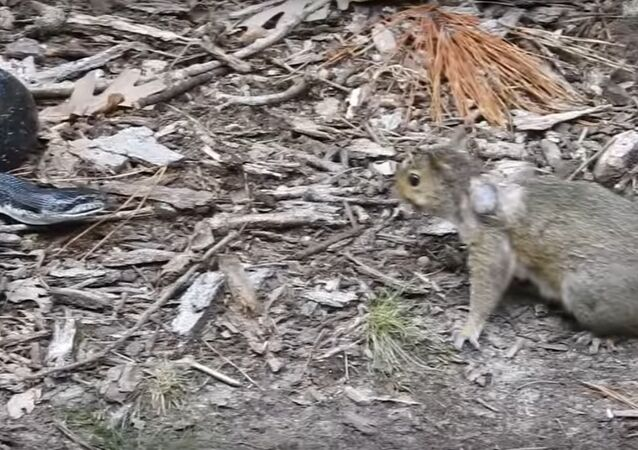 Potyčka veverky a hada se dostala na video