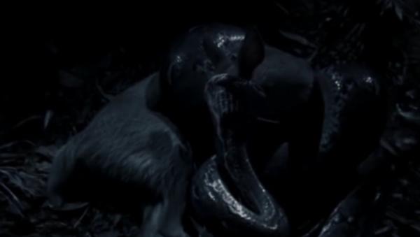 Nejdelší had na světě hladověl rok a sežral jelena (VIDEO) - Sputnik Česká republika