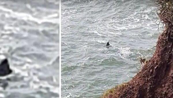 Tajemství obrovského 6metrového žraloka, který byl spatřen na pobřeží Devonu (VIDEO) - Sputnik Česká republika