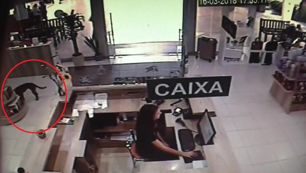 Pes zloděj v Brazílii - Sputnik Česká republika