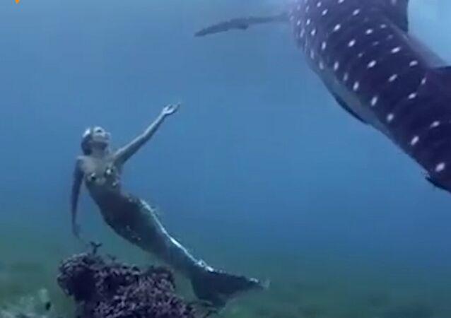 To je co, opravdová mořská panna?