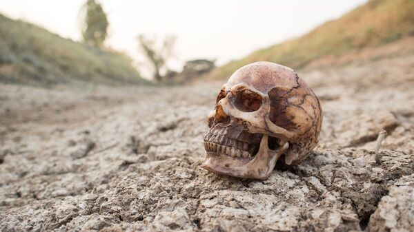 Lebka na suché půdě - Sputnik Česká republika