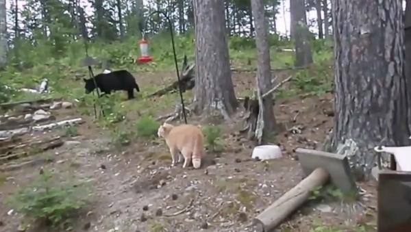 Drzý bláznivý kocour honí vylekaného medvěda - Sputnik Česká republika