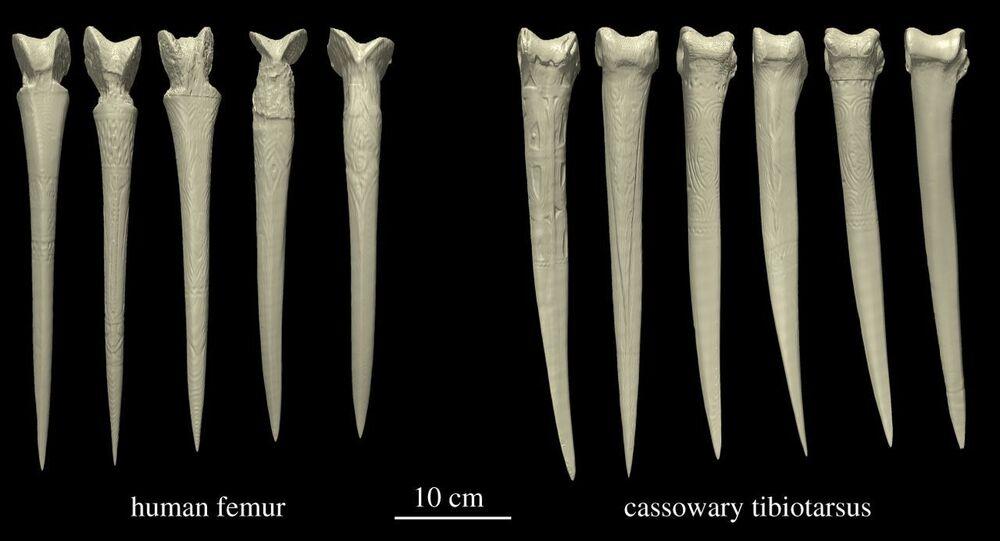 Dýky z lidských kostí