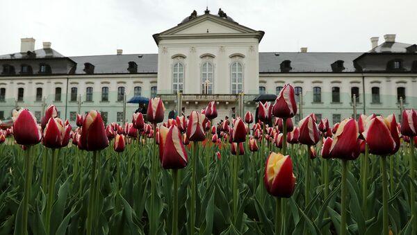 Nizozemsko vyšlechtilo pro SR novou odrůdu tulipánů s názvem Slovensko - Sputnik Česká republika