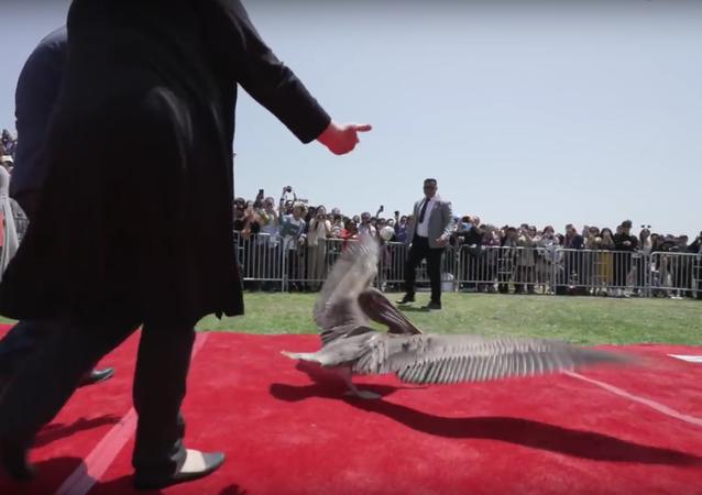 V USA pelikáni téměř překazili maturitní večírek na univerzitě