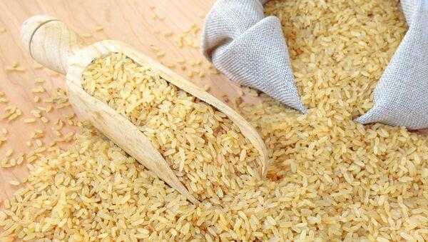 Rýže - Sputnik Česká republika