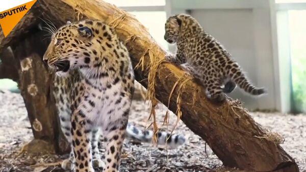 Leopard - Sputnik Česká republika