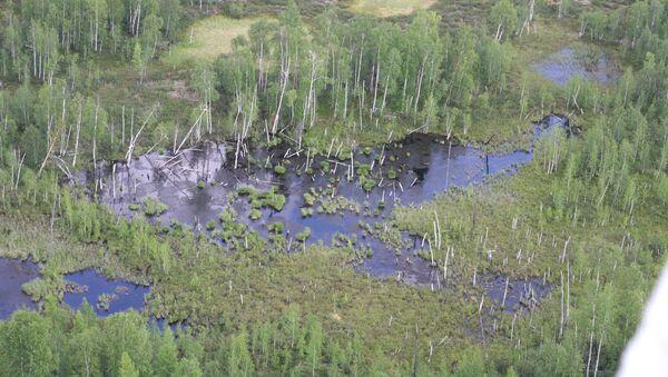 Tajga, kde údajně spadl Tunguzský meteorit - Sputnik Česká republika