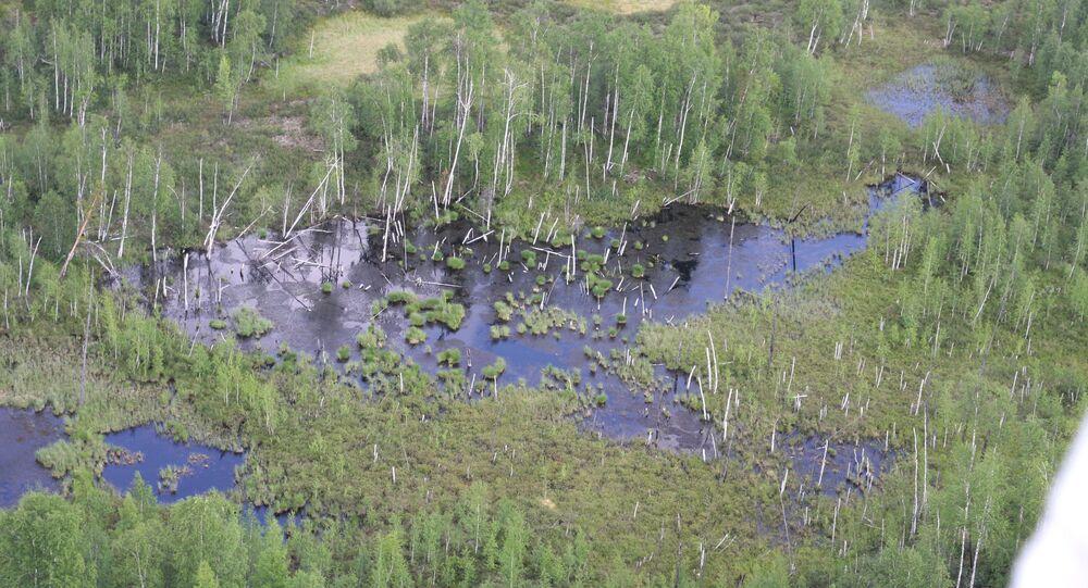 Tajga, kde údajně spadl Tunguzský meteorit
