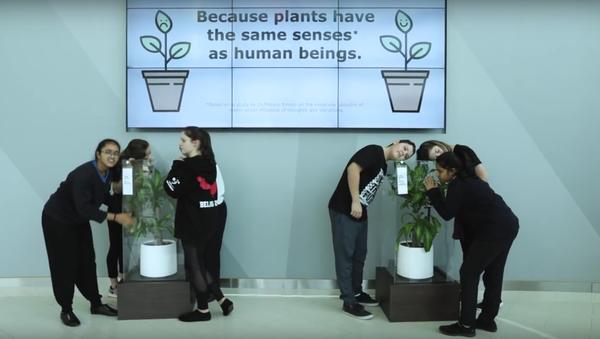 IKEA učí školáky dobru tím, že jim nabízí ponížit rostlinu - Sputnik Česká republika