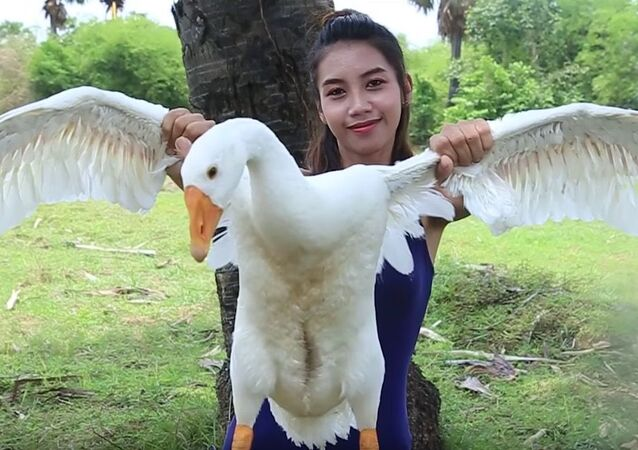 Ah Lin Tuch