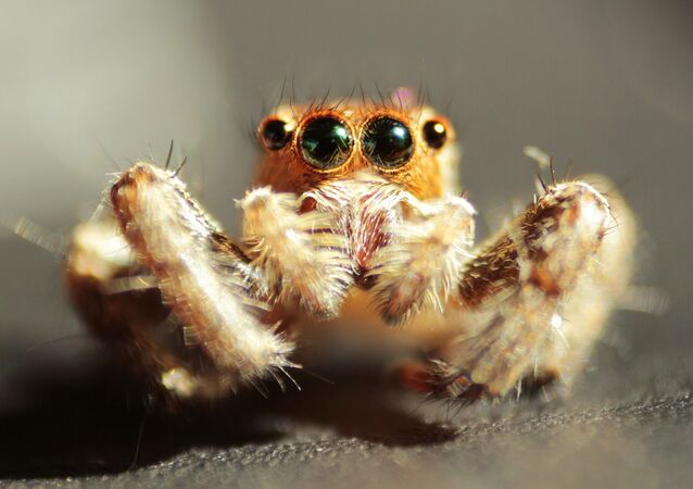 Pavouk, jeden z velmi rozšířených členovců