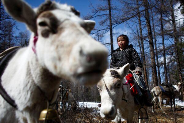 Podívejte se, jak žijí chovatelé sobů v Mongolsku - Sputnik Česká republika