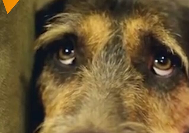 Je to skutečný ráj pro toulavé psy!
