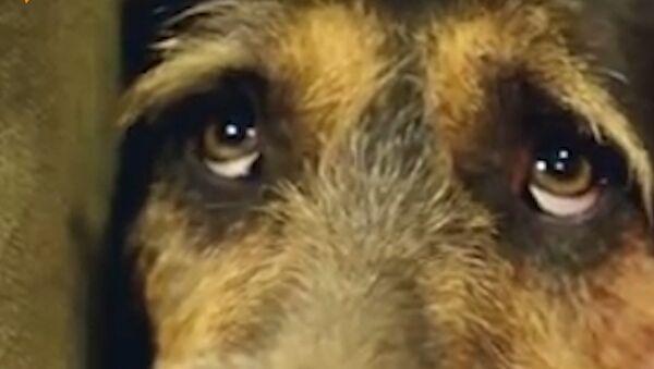 Je to skutečný ráj pro toulavé psy! - Sputnik Česká republika