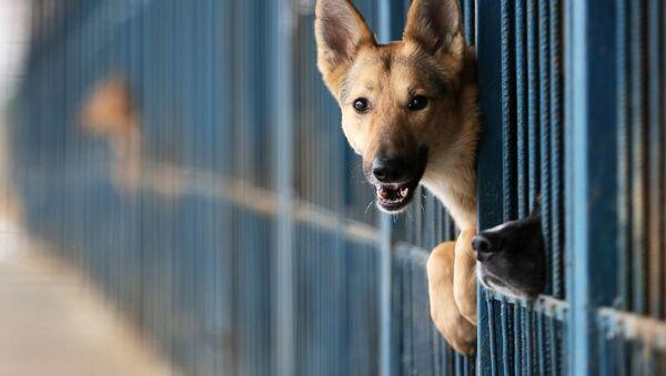 Pes v útulku pro zvířata - Sputnik Česká republika