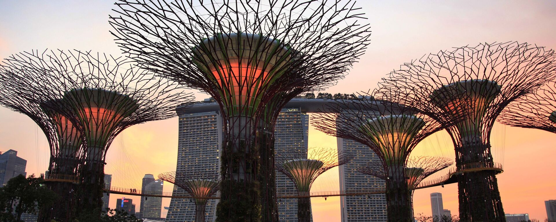 Super stromy, Singapur - Sputnik Česká republika, 1920, 01.07.2021