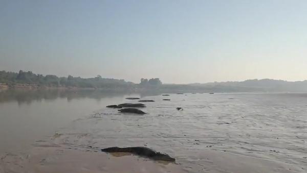 Na břeh řeky vylezly desítky krokodýlů - Sputnik Česká republika
