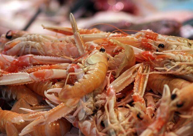 Krevety. Ilustrační foto