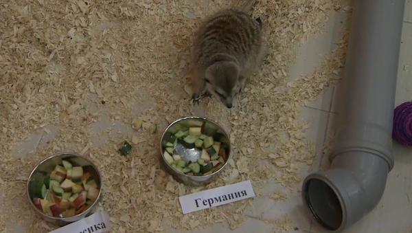 Ruská surikata předpověděla vítězství Německu - Sputnik Česká republika