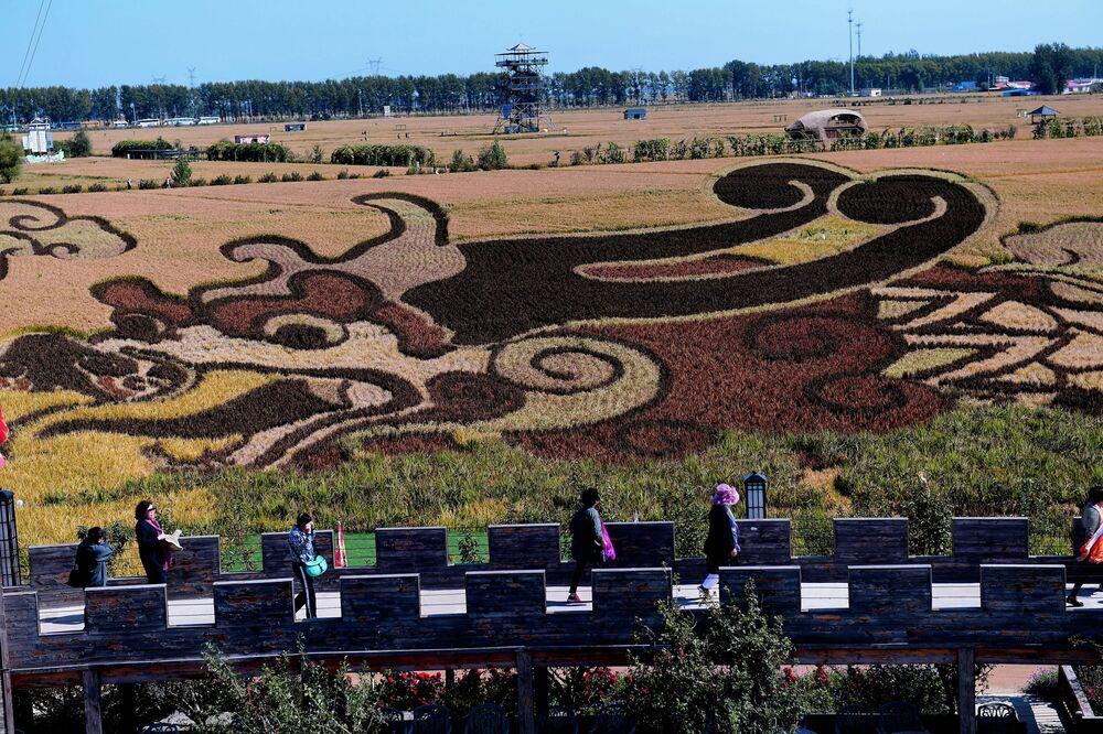 Ilustrace draka na rýžovém poli v Číně