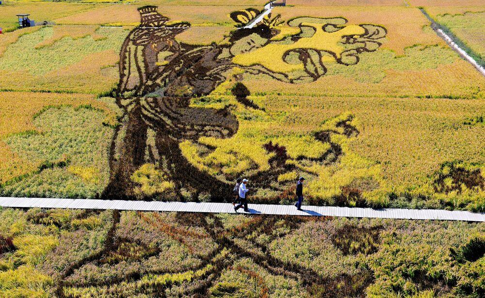 Ilustrace vytvořená na rýžovém poli v Číně