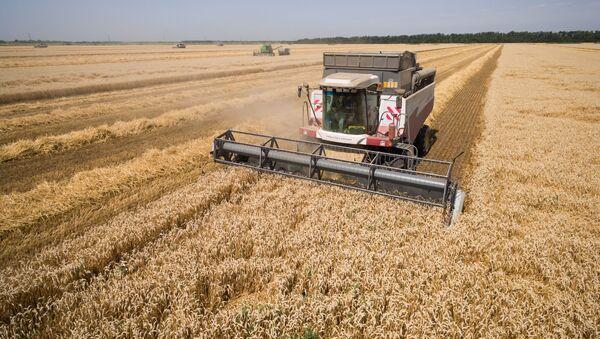Sklízení pšenice v Krasnodarském kraji - Sputnik Česká republika