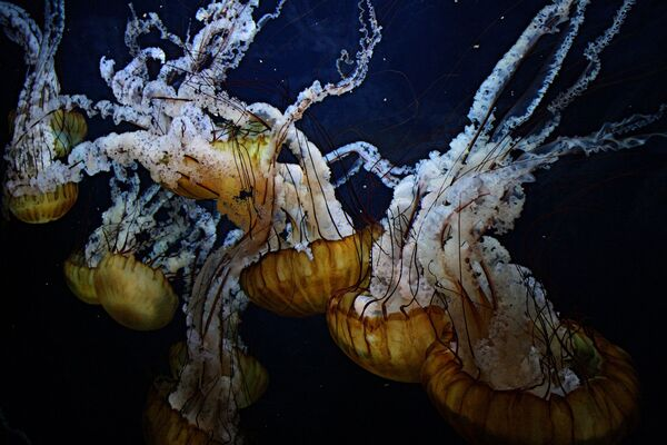 Jezero medúz: fantastický svět s 2 miliony zlatých a měsíčních podmořských obyvatel - Sputnik Česká republika