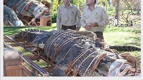 Obrovského 600kilogramového krokodýla chytili po osmiletém honu (VIDEO) - Sputnik Česká republika