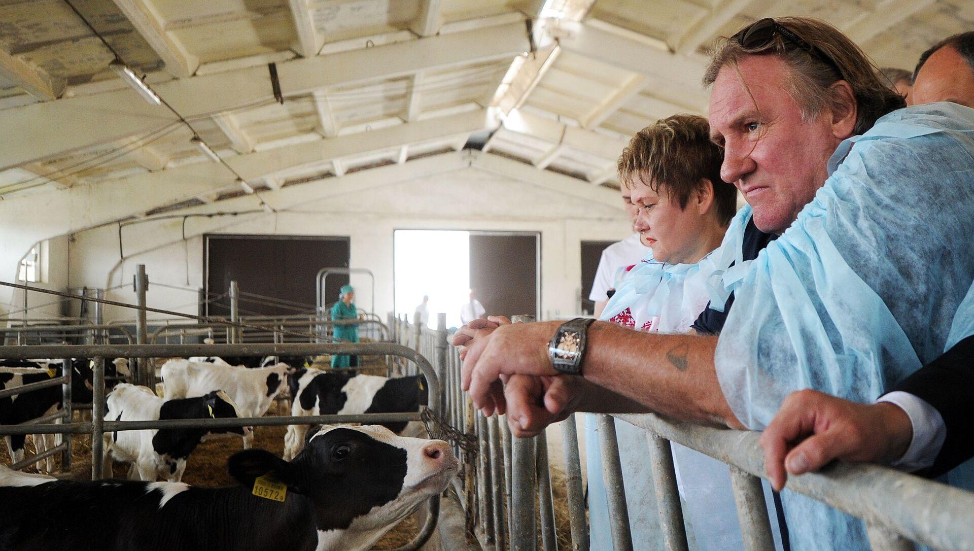 Herec Gerard Depardieu během návštěvy chovatelské farmy v Minsku. - Sputnik Česká republika, 1920, 23.02.2021