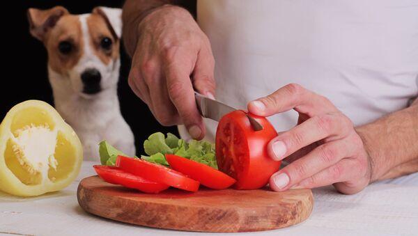 Pes se dívá na jídlo - Sputnik Česká republika