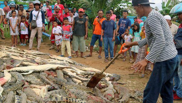 Pozůstatky krokodýlů, které zavraždili Indonésané - Sputnik Česká republika