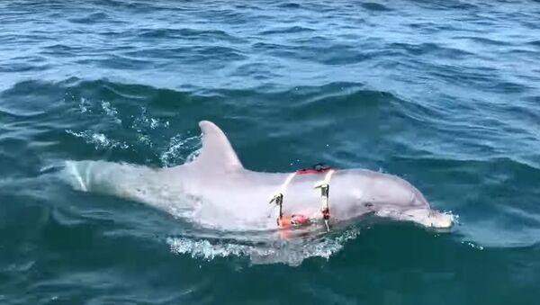 Jak v USA cvičí delfíny pro válku pod vodou - Sputnik Česká republika