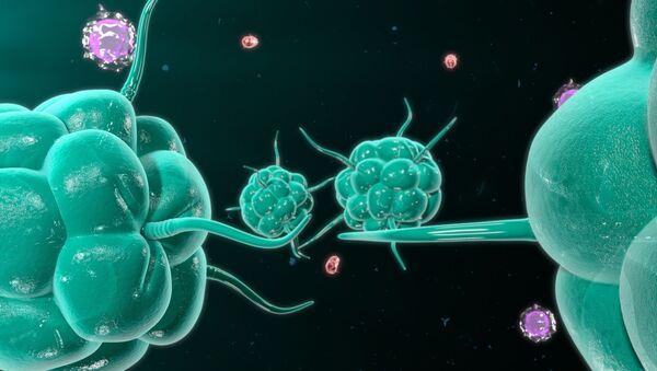 Rakovinové buňky a imunitní systém člověka - Sputnik Česká republika