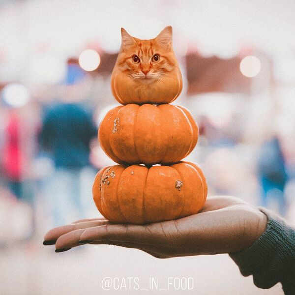 Nejchutnější a nejlákavější kocouři a kočky - Sputnik Česká republika