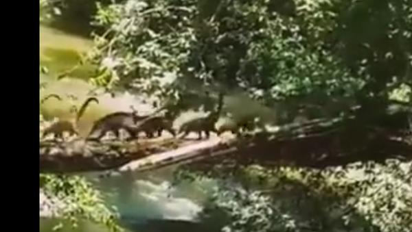 Dinosauři - Sputnik Česká republika