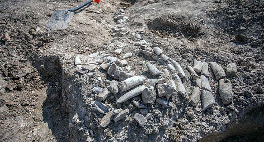 Kostra starověké velryby, která byla nalezena v Krymu