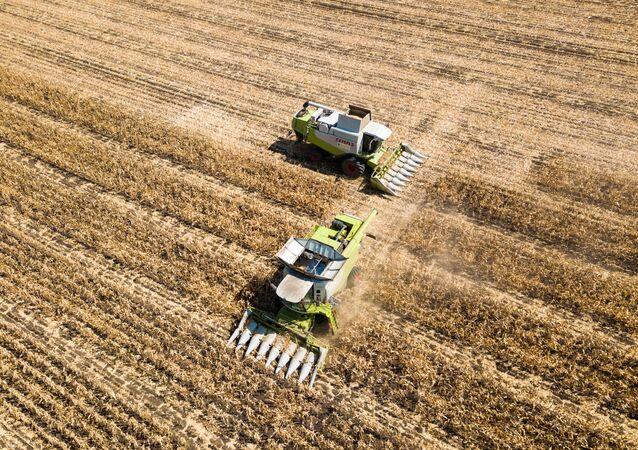 Kukuřičné pole.