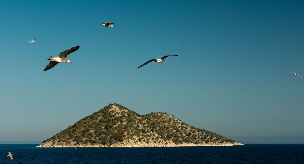 Racci nad Středozemním mořem