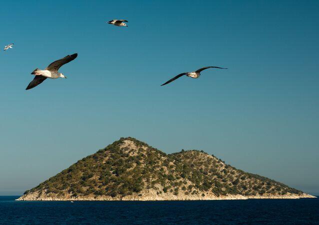 Racci nad Středozemním mořem. Ilustrační foto.