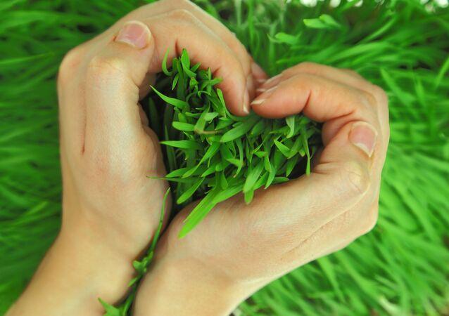 Tráva v rukou ve tvaru srdce.