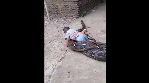 Rodiče natočili, jak si dítě hraje s obrovskou krajtou (VIDEO) - Sputnik Česká republika
