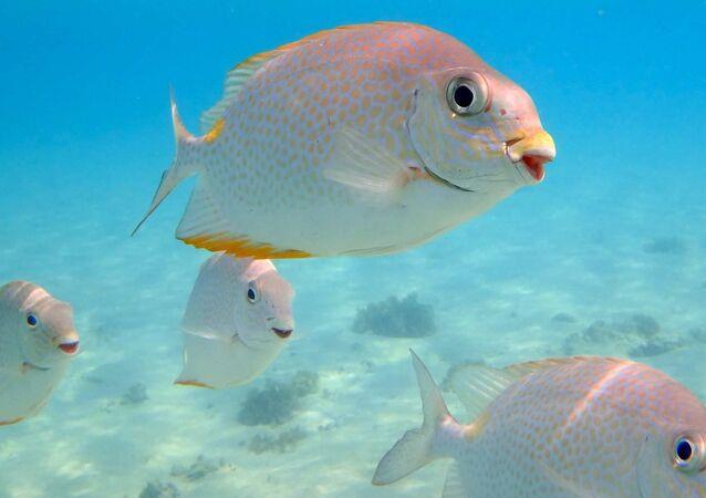 Usměvavá ryba
